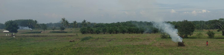 Feuer auf Feldern Sumatras